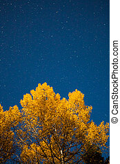 Yellow tree and starry sky at autumn night
