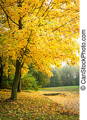 Yellow tree in forest in the autumn, Europe