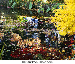 Yellow Tree Lily Pads Colorful Water Reflections Van Dusen Garde