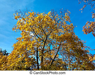 Yellow tree on a blue sky background