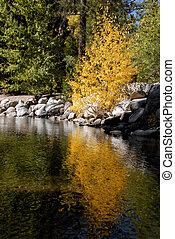 Yellow Tree Reflection