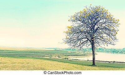 Yellow tree standing alone in meadow field, beautiful landscape in vintage tone