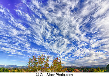 yellow tree tops with blue sky and beautiful white clouds