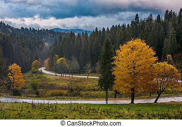 yellow trees along the mountain road in autumn. beautiful...