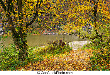 yellow trees on rocky shore of the river