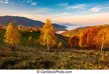 yellow trees on the edge of a hill in autumn. lovely...