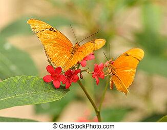 yellow tropical butterflies