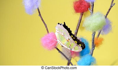 Yellow tropical butterfly sitting on a stick and flapping...