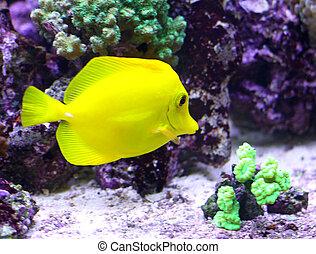 yellow tropical fish swimming in the sea