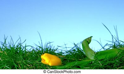Yellow tulip falling in the grass on blue background in slow...
