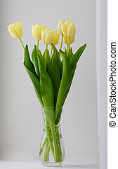 yellow tulip flowers in glass vase isolated on white background