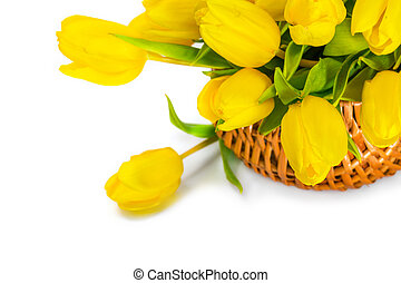 Yellow tulip flowers