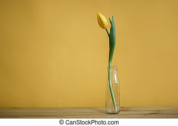 yellow tulip in a bottle on a yellow wall background