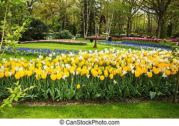 yellow tulip in the garden