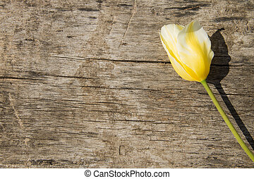 Yellow tulip on antique wooden background with copy space