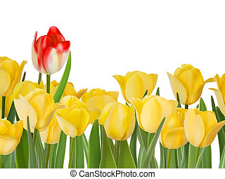 Yellow tulips and one red. EPS 8 - Yellow tulips and one red...