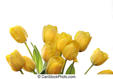 Yellow Tulips - bouquet of yellow tulips in a window