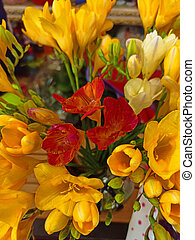 yellow tulips close-up. shallow depth of focus. selective focus