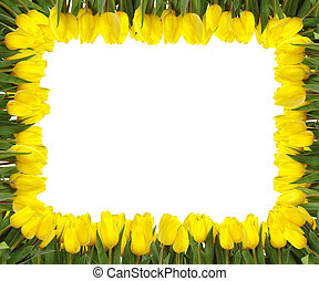 YELLOW TULIPS FRAME - A frame of bright yellow tulips on ...