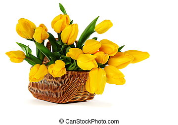 Yellow tulips in a basket on a white background.