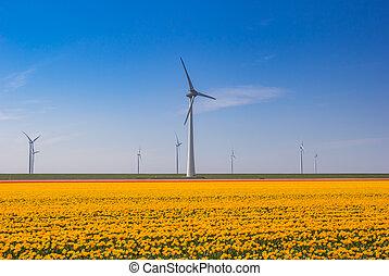Yellow tulips in front of wind turbines in Noordoostpolder, Netherlands
