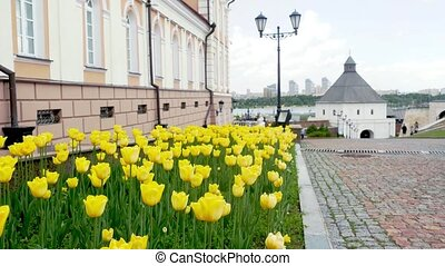 Yellow tulips in Springtime in a Square. 3840x2160, 4k -...