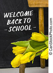 Yellow tulips lie on a wooden chair on the background of a school board with the inscription- Welcome back to school