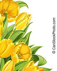 Yellow tulips on white background