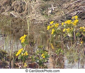 Yellow water flowers is moving