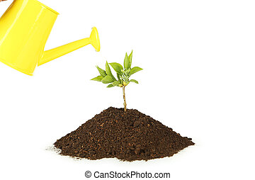 Yellow watering can pouring green plant in soil on white background