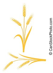 Yellow wheat ears on a white background