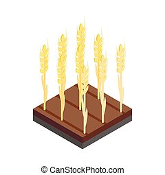 Yellow wheat ears on the field isometric 3d icon