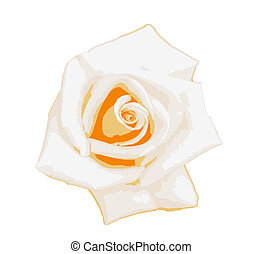 Yellow-white rose isolated on a white background. A rose is a woody perennial flowering plant of the genus Rosa, in the family Rosaceae, or the flower it bears