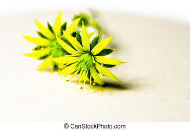 small flower