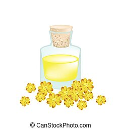 Yellow Yarrow or Achillea Millefolium with Essential Oil - ...