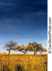 yellowed tree in a field under a dark autumn sky - few...