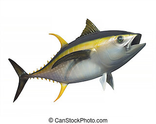 Yellowfin tuna, isolated - Yellowfin tuna in fast motion,...