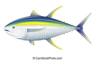 Yellowfin tuna, realistic sea fish illustration on white...