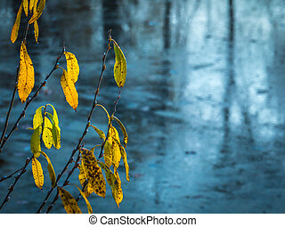 Yellowing leaves on the branches of a coastal willow wither over a frozen pond