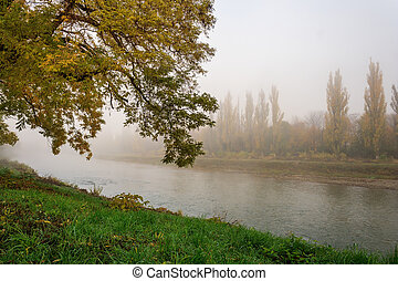 yellowing tree in fog by the river - yellowing tree on the...