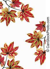 Yellowish orange maple leaves. - Yellowish orange maple...