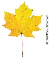 Yellow/Orange Maple Leaf