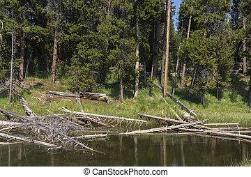 Yellowstone lake in Yellowstone National Park in Wyoming