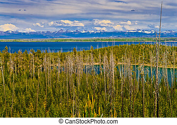 Yellowstone Lake surrounded by tall pine trees with Grand ...