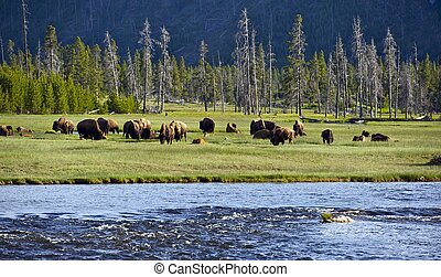 yellowstone, landschaften