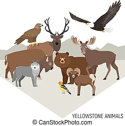 Yellowstone National Park animals. Grizzly, moose, elk, bear, wolf, golden eagle, bison, bighorn sheep, bald eagle