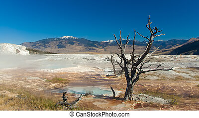 Yellowstone National Park: Mammoth Hot Springs