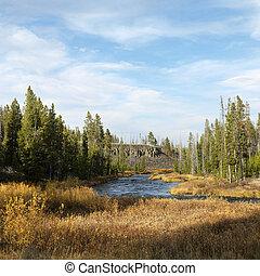 Yellowstone Park landscape.