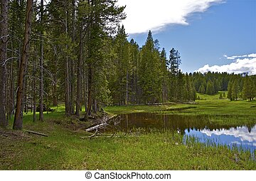 Yellowstone Park Scenery