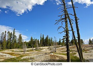 Yellowstone Summer Landscape